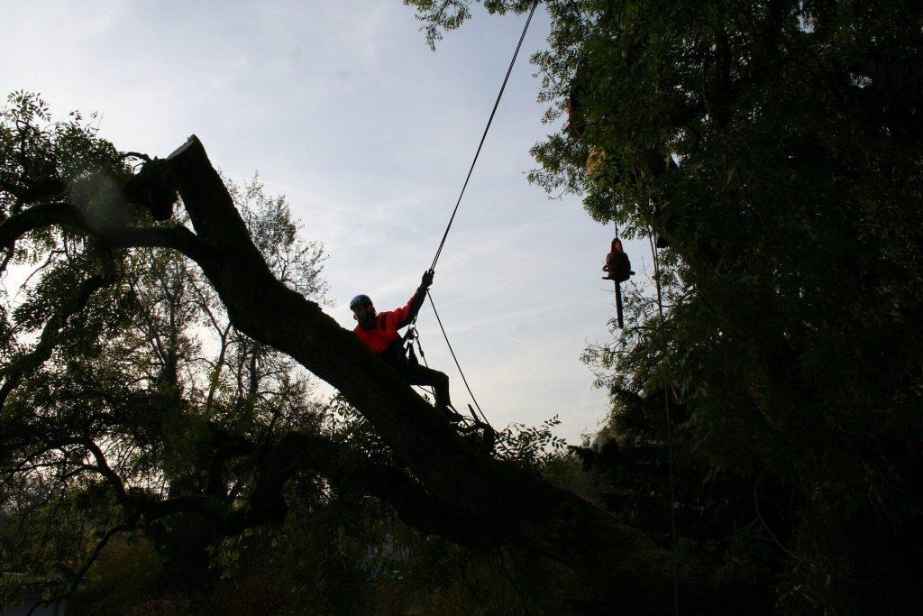 Trädfällning Piteå